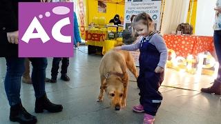Dog show. Выставка собак, Минск 2017. Знакомимся с собачками. Выбираем наряды.