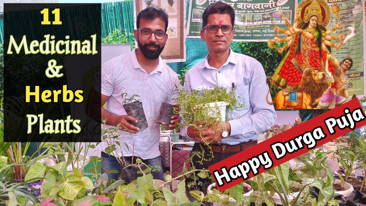 11 Most Powerful Medicinal & Herbs Plants in India #Herbalmedicine