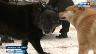 В Тверской области продолжается массовая вакцинация животных от бешенства