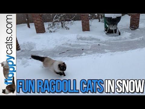 ❄️ Crazy Ragdoll Cats In Snow ❄️