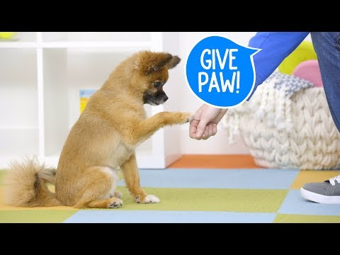 Train Your Dog to Give Paw | Chewy
