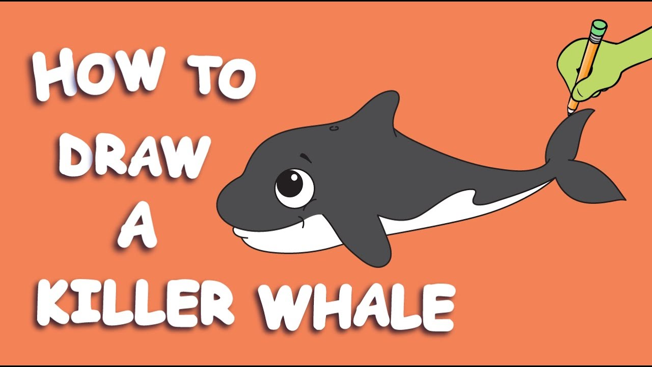 Uncategorized How To Draw An Orca Whale how to draw a killer whale youtube whale