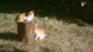 Cat family enjoying the sun!!!