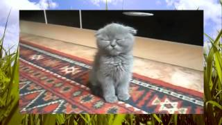 Приколы про кошек и котят котеки