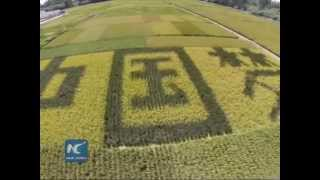 Paddy field art to promote rice planting in China' s Xinjiang