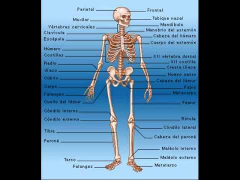 Huesos (de la