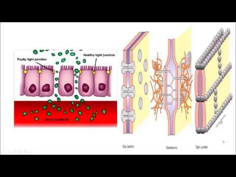 AF SOMALI Cells and Tissues