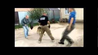 Дрессировка собак в Оренбурге. КЦ