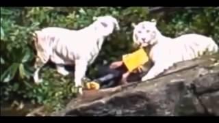 ЖЕСТЬ! Нападения животных на людей  Подборка  ч 2