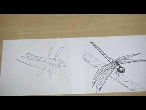 トンボの絵の描き方と方法とコツ Tips And Methods Of How To Draw A Picture Of A Dragonfly Youtube