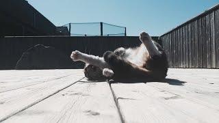 CRAZYCUTE KITTEN WANTS IT ALL - Lucas The Cat