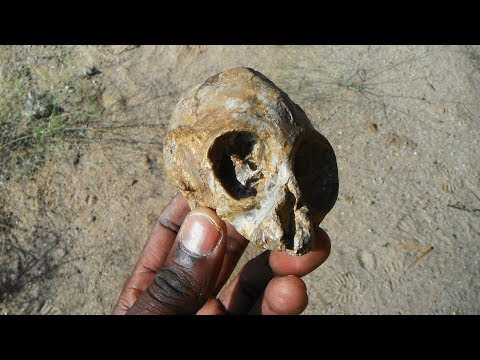13 million-year-old infant ape skull discovered in the Turkana Basin - Dauer: 4 Minuten, 12 Sekunden