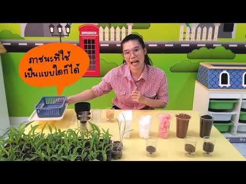 การทดลองแสนสนุก เรื่อง การเจริญเติบโตของพืช