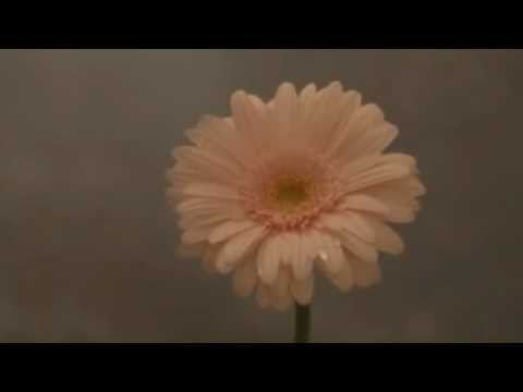 花は咲くプロジェクト/花は咲く(ミュージックビデオダイジェスト)