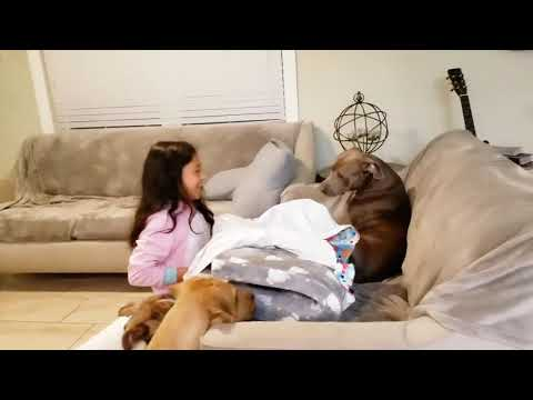 Dog celebrates her first birthday! from YouTube · Duration:  11 minutes 13 seconds