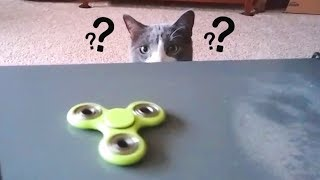 Cats Confused by Fidget Spinners Compilation