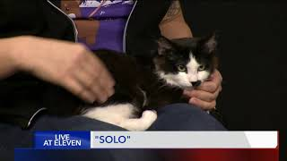 SOLO - Fox 13 Best friend from the Humane Society of Utah