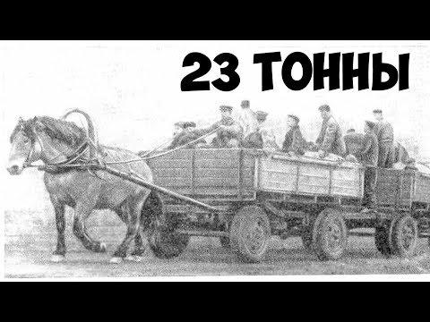 7 КРАСИВЫХ И УДИВИТЕЛЬНЫХ РУССКИХ ПОРОД  ЛОШАДЕЙ