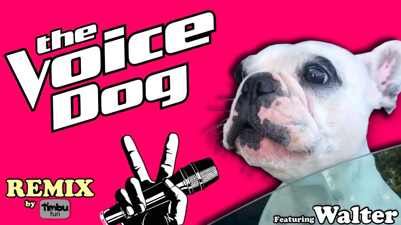 Pit Bull Terrier Walter Dog Meme