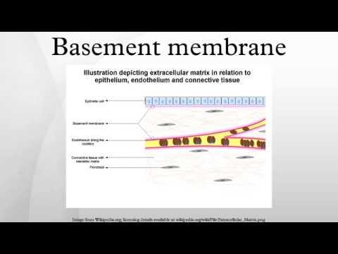 glomerular basement membrane videos