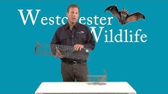Tomahawk Squirrel Removal Equipment Demo By Westchester Wildlife