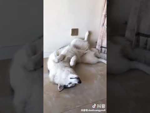 Dog Series: How my dog sleeps VS how other's dog sleeps