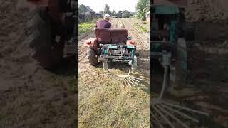 Как мы копаем картошку