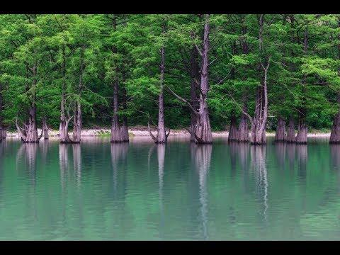 Кипарисовое озеро. Крокодилы, водные змеи и т.д.