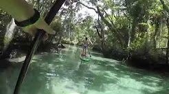 Manatee Paddle SUP Crystal River Florida