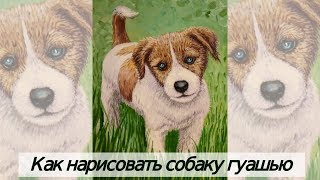 Как нарисовать собаку гуашью поэтапно/подробный видео урок
