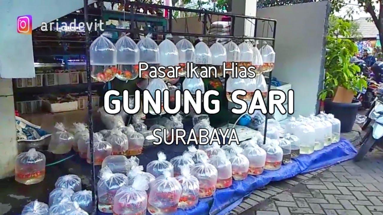 Pasar Ikan Hias Terbesar Di Surabaya Gunung Sari Youtube