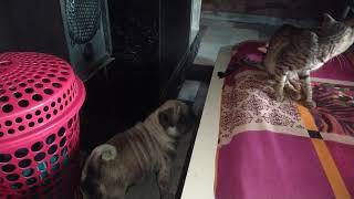dog and cat care center screenshot 2