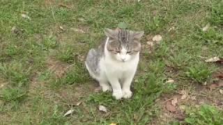 кот и ястреб