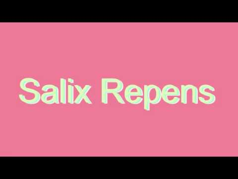 How to Pronounce Salix Repens