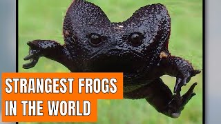 Discover The Strangest Frogs In The World