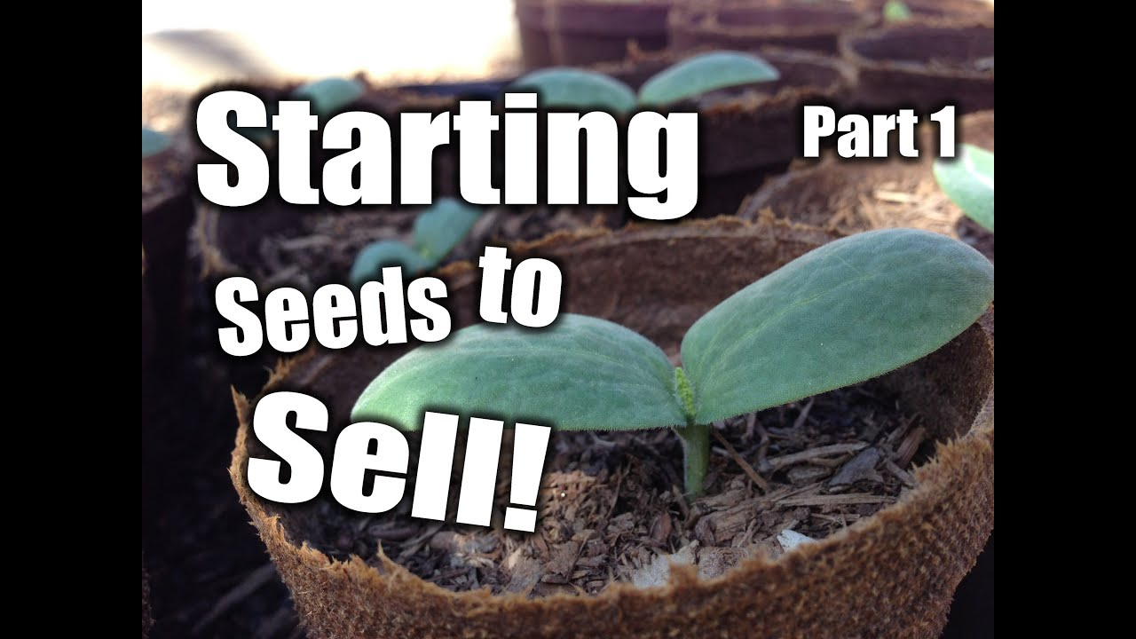 Starting plants from seed to sell! (1)