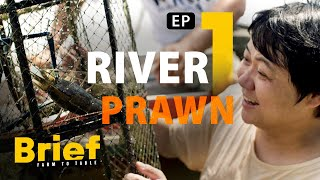 EP.1 River Prawn l Brief: Farm to Table