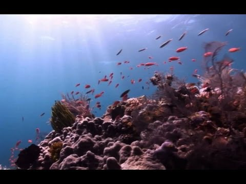 Scuba Diving East Timor in 60 seconds