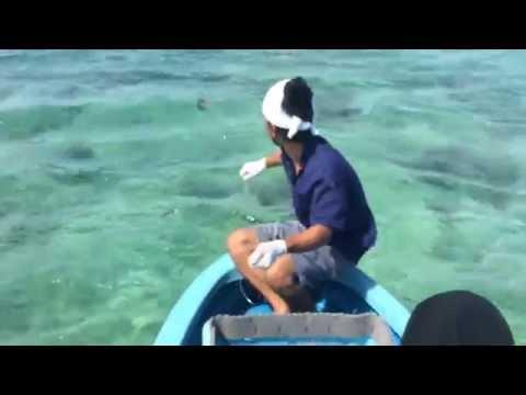 沖縄県宮古島の延縄漁の様子
