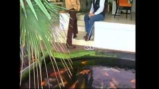 Algen im Teich! Grünes Wasser, Fadenalgen, Schwebealgen, Grünalgen u. Braunalgen...