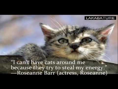 super best Funny Cats Video - Cats Pictures