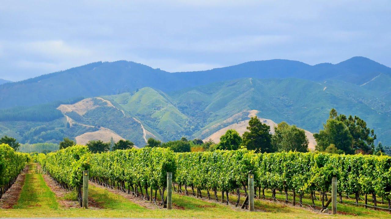 New Zealand: Marlborough Wine Tour - YouTube
