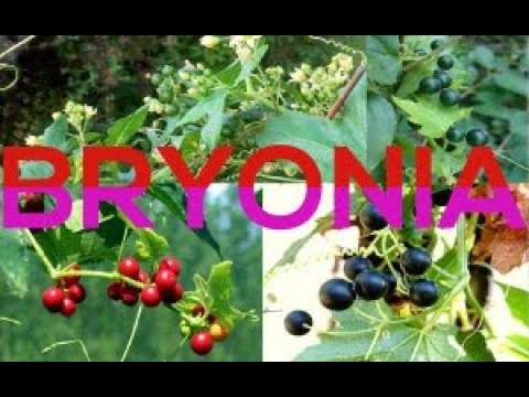 Bryonia Alb| Bryonia| Bry: Homeopathic Remedy For Practitioner Part1 (Synonyms, Generalities & Mind)