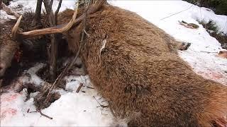 Zrzuty 2018 Wieniec jelenia byka (10-tak) Ofiara wilków (Úhyn jeleňa)