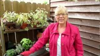 Grow Your Own Herbs De Provence