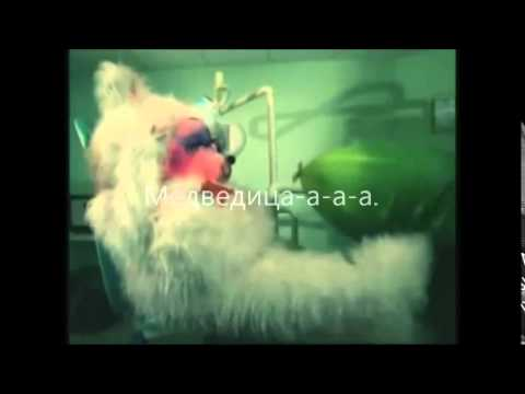 mumi troll medvedica karaoke (polar bear)