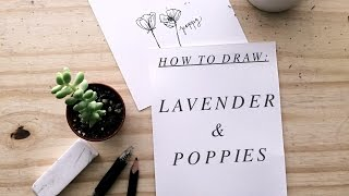 How to Draw: Lavender + Poppies | Authentic by Frani
