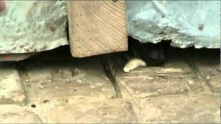 Зоозащитники кормят собаку  которая заперта