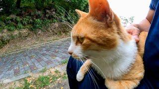 公園ベンチ前の歩道で寝転び通り掛かるモフり人を待っている野良猫