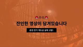 [개도살 금지]주의춘천시 개 도살장 도살 영상 공개! …